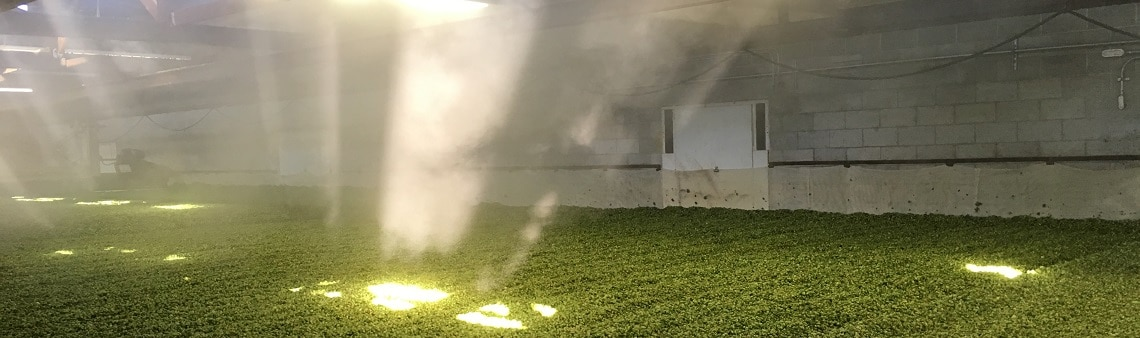 Photo of the last loads dry on teh kiln at cornerstone ranch. Hops with light coming through to represent the page of enlightenment. FAQ and terminology for hops