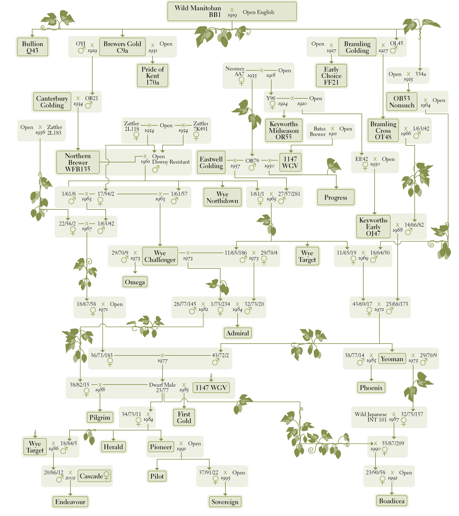 Picture of the British hop family tree